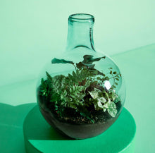 Load image into Gallery viewer, Big Papa Terrarium