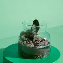 Load image into Gallery viewer, Lil Bro Terrarium