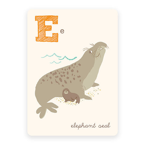 Elephant Seal | ABC Card