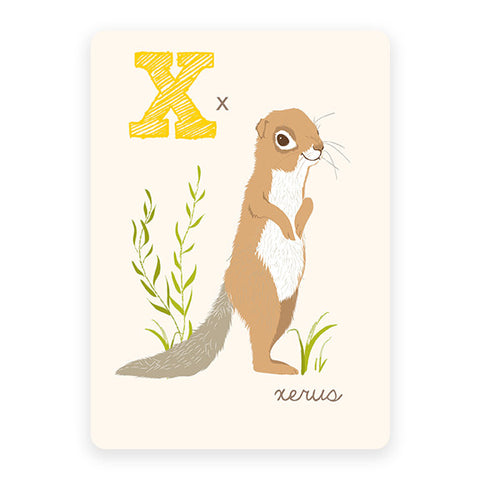 Xerus | ABC Card