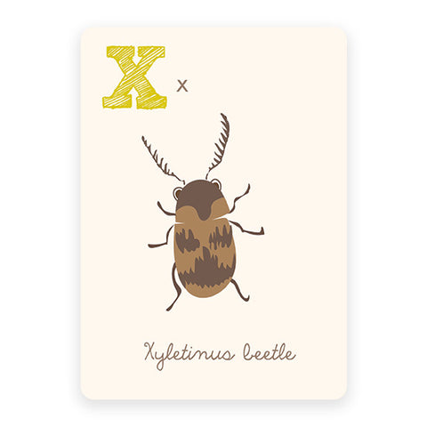 Xyletinus Beetle | ABC Card