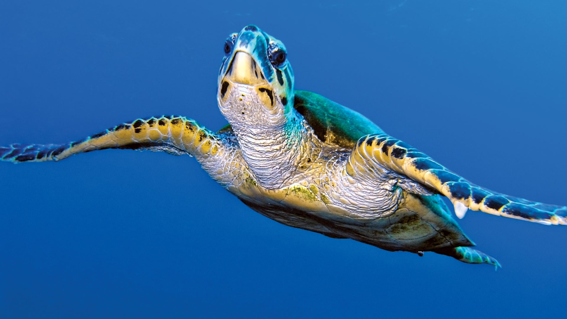 10 Fun facts for the Turtle!