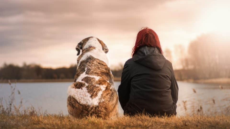 Five reasons why a dog is a man's best friend