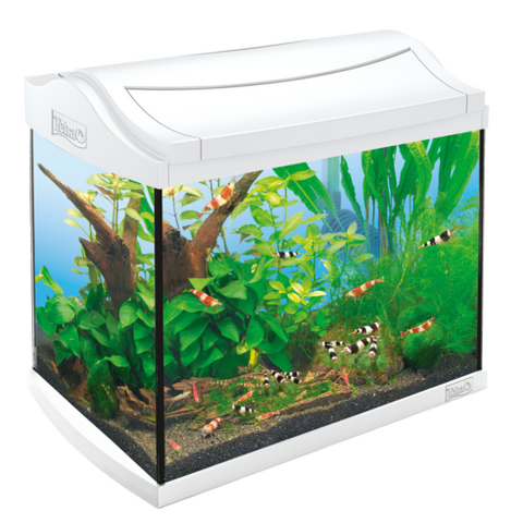 Tetra - Aquarium Aqua Art Shrimps Comp. Set 20L 39.5x28x33cm - zoofast-shop