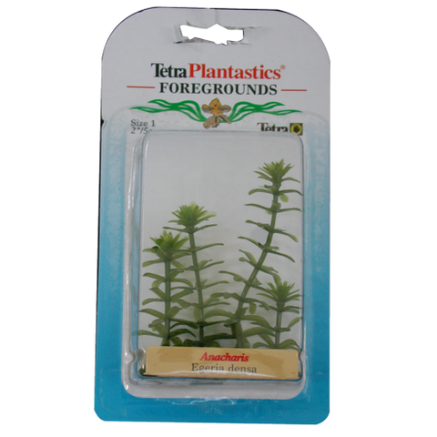 Tetra - Plant Decorative Foregrounds Anarcharis 5cm - zoofast-shop