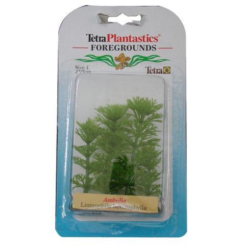 Tetra - Plant Decorative Foregrounds Ambulia 5cm - zoofast-shop