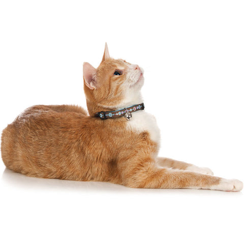 Hunter - Collar For Cat Signs Brown-L.Blue