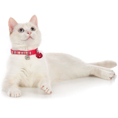 Hunter - Collar For Cat Glossy Stripes