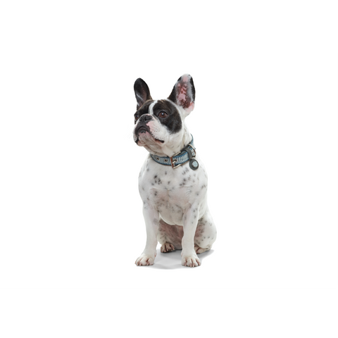 Hunter - Collar For Dog Blue-Grey - zoofast-shop