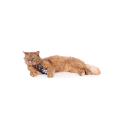 Hunter - Toy For Cat Elroy Dog - zoofast-shop