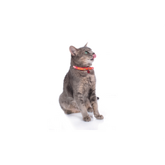 Hunter - Collar For Cat Derby Rubber - zoofast-shop