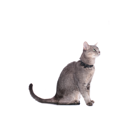 Hunter - Collar For Cat Hunting - zoofast-shop