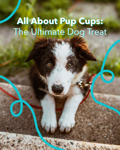 All About Pup Cups: The Ultimate Dog Treat