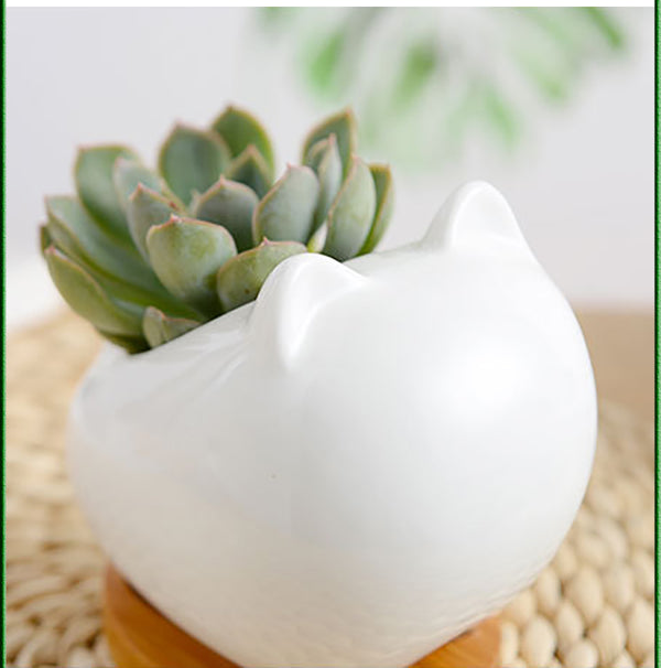 Animal Succulent Pots