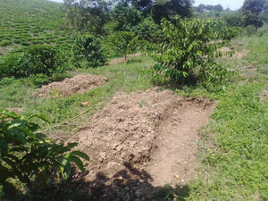 Improving our coffee plantation at Kihembe Secondary School