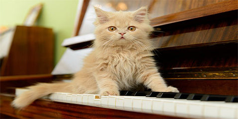 What's the best music for reducing cats stress levels?