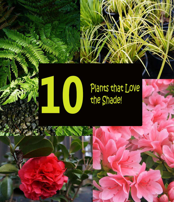 10 Plants that don't need sun!