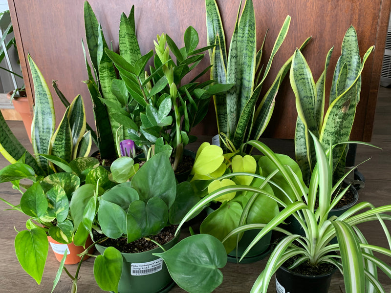 House Plants for Low Light Spaces