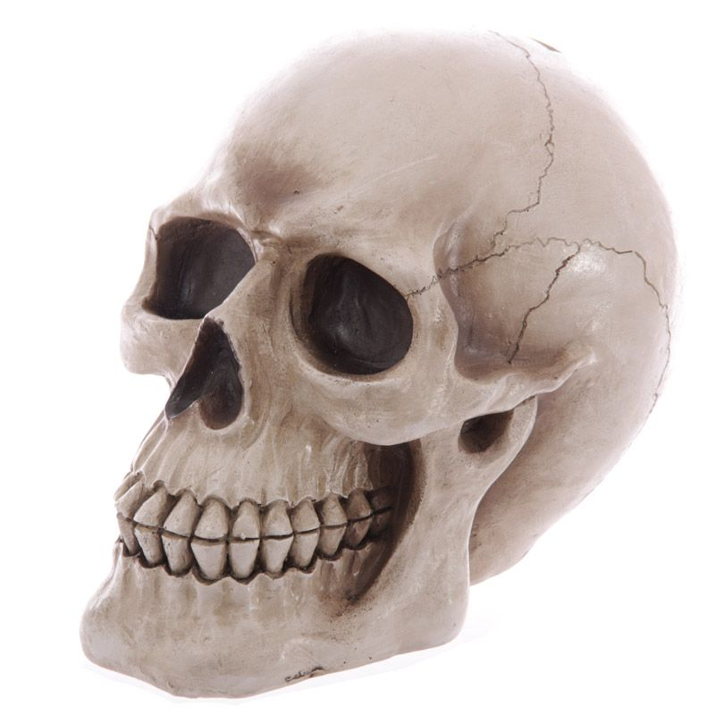 Life Size Realistic Skull Money Box