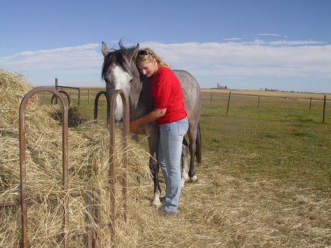 Meet Sarah Chambers, owner of Horse Gear Canada!