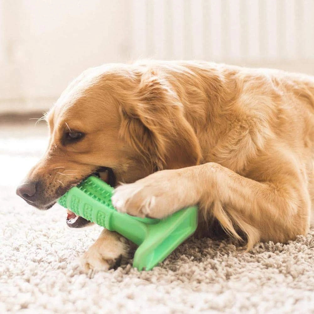 DOG TOOTHBRUSH - HELPS PREVENT DOG GUM DISEASE