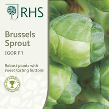Load image into Gallery viewer, RHS- Brussel Sprout Igor