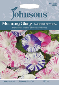 Morning Glory Carnevale Di Venezia
