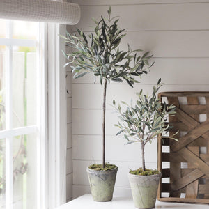Flora Olive Tree (available in two sizes)