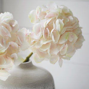 Pale pink and cream hydrangea stem