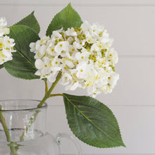 Load image into Gallery viewer, Lace cap white hydrangea