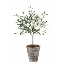 Load image into Gallery viewer, Flora Olive Tree (available in two sizes)