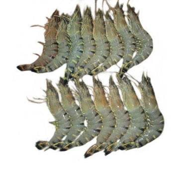 Black Tiger Prawns (Jumbo)