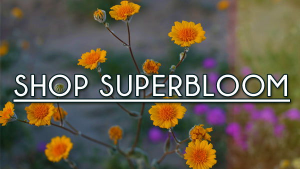 Borrego Springs Superbloom Shoot