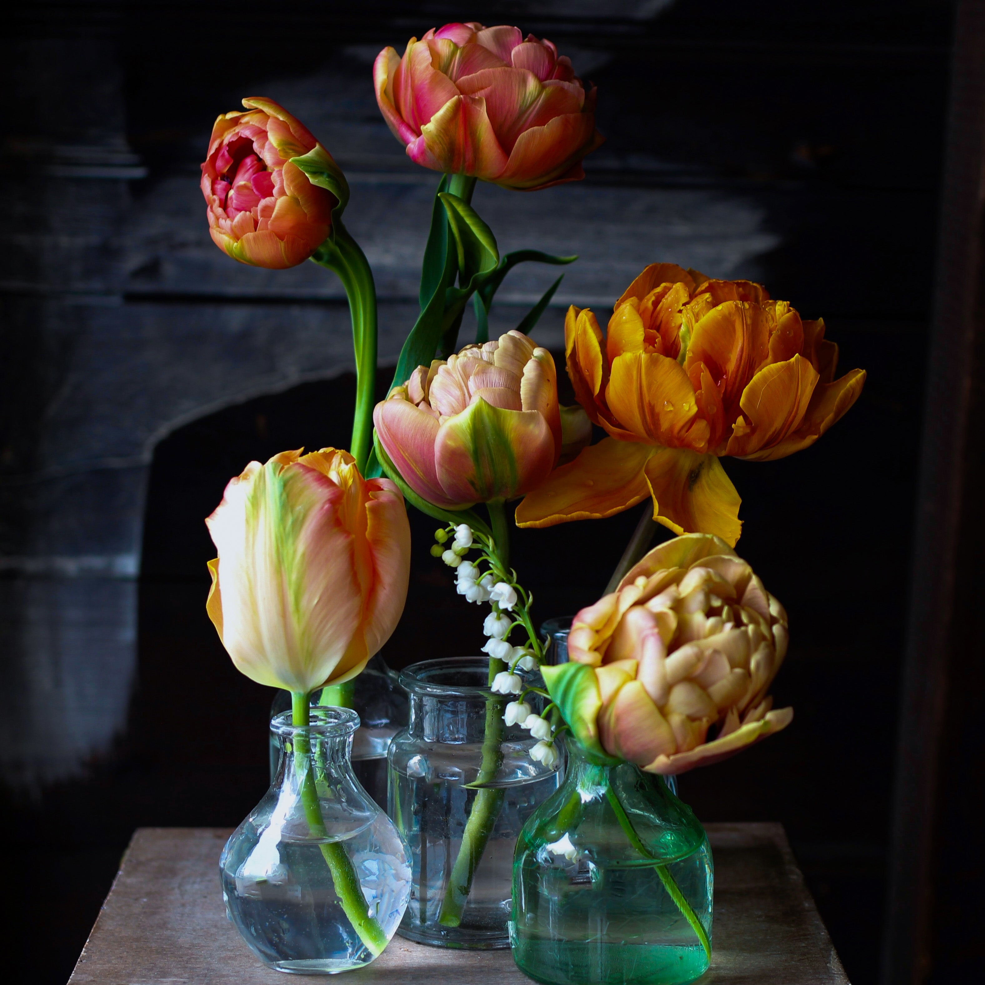 double late and parrot tulips