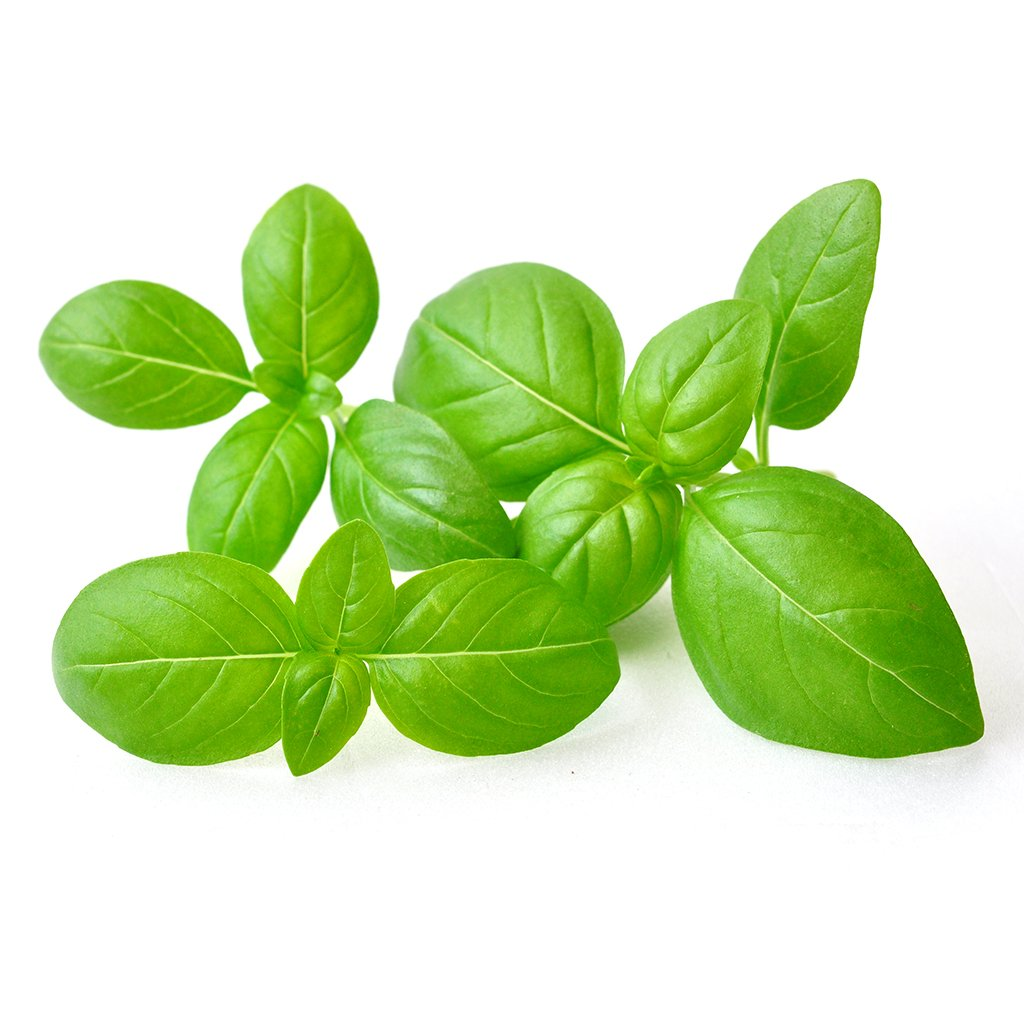 How To Raise Sweet Basil - Fasting Growing and Tasty