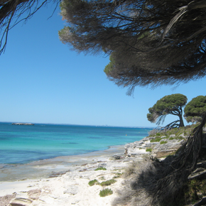 Photo of trees at Phillip Point, Rottnest Island.