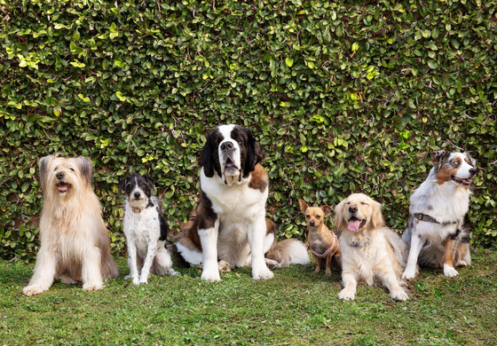 Group of dogs sitting in front of hedge