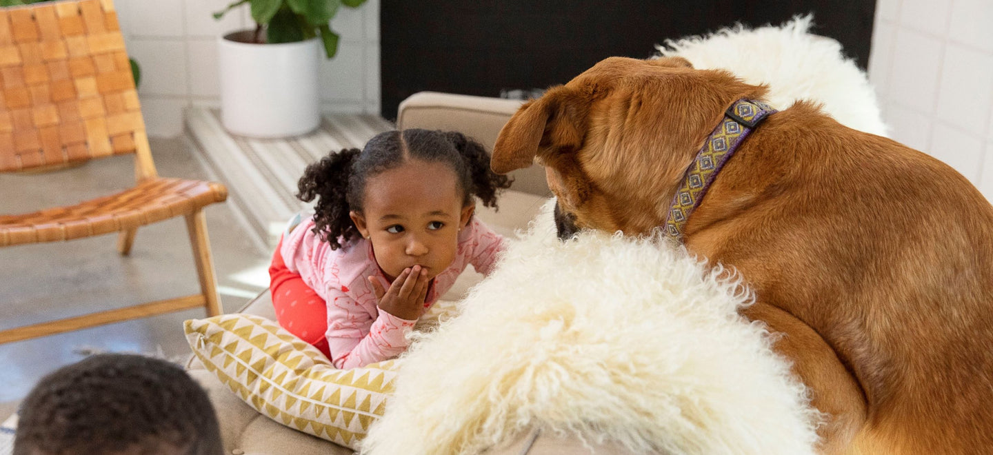 Little girl playing with dog on couch