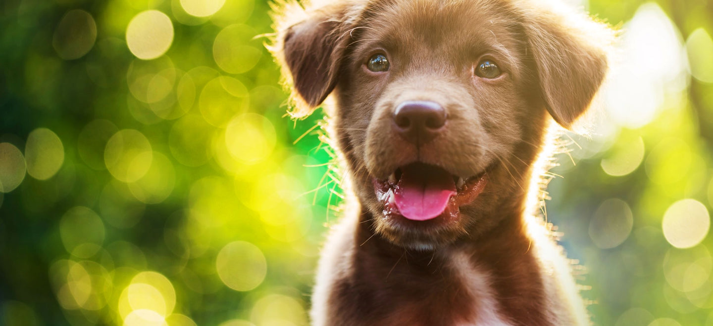 The healthiest puppy food