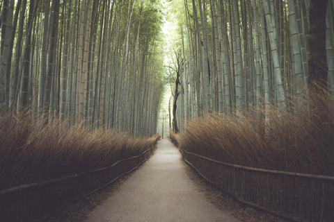 Path Leading through a Bamboo Forest