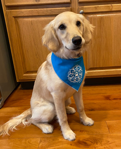 Pet Bandana (provides 8 meals for kids)