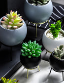 Succulents Planter Flower Ceramic Pots(Vase) With Golden Iron Stand - GIFT4U