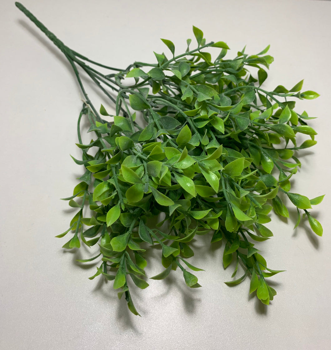 Mini tea leaf bush