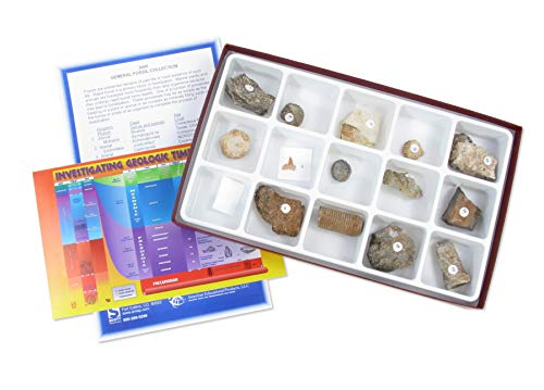 American Educational General Fossil Collection