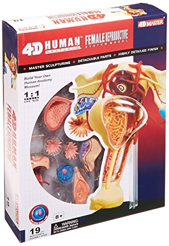 Famemaster 4D-Vision Human Female Reproductive Anatomy Model