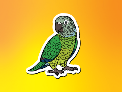 Dusky-headed Conure Magnet