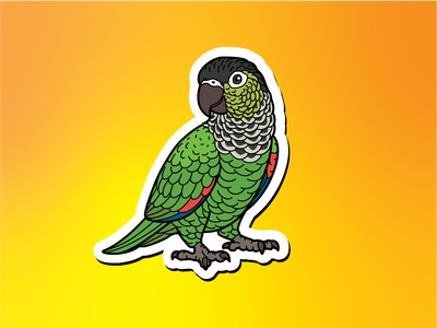 Black-capped Conure Magnet