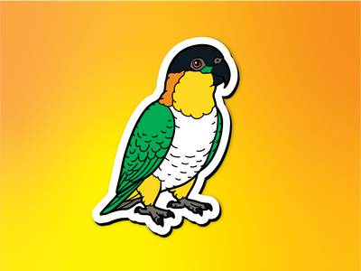 Black Headed Caique Magnet