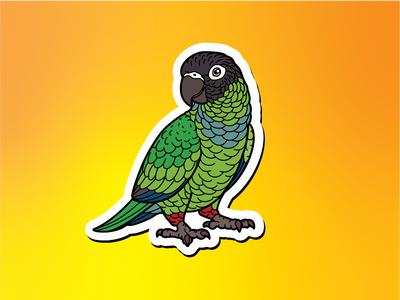 Nanday Conure Magnet