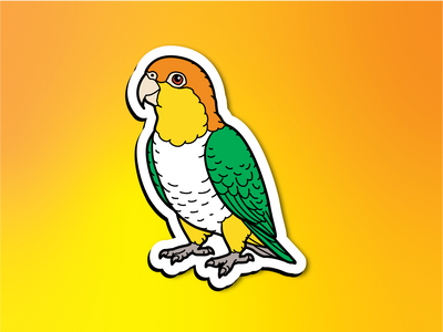 White-Bellied Caique Magnet
